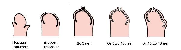 viskazivaniya-pro-parney-blyadey